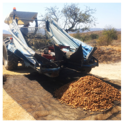 unload almond harvest.jpg